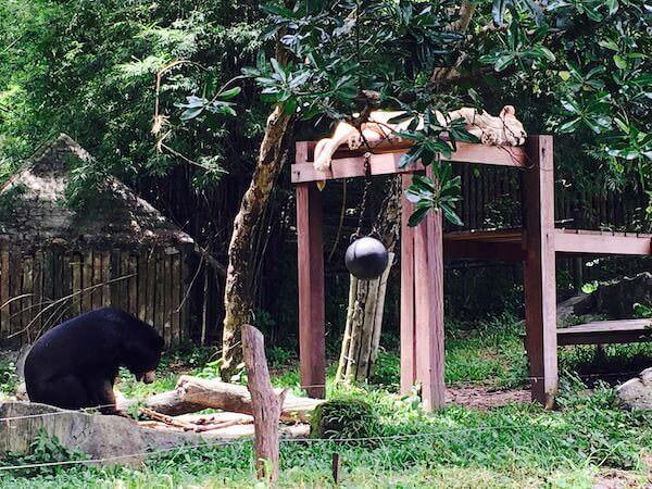 ホワイトライオンと熊の異種共存