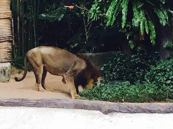 カオキアオ動物園のジャングルショー