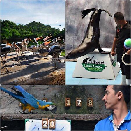 カオキアオ動物園の動物ショー