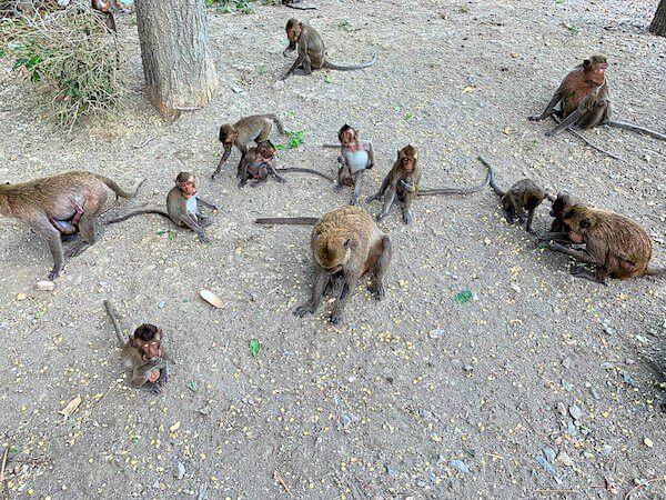 カオルアン洞窟の駐車場で群れている猿の家族