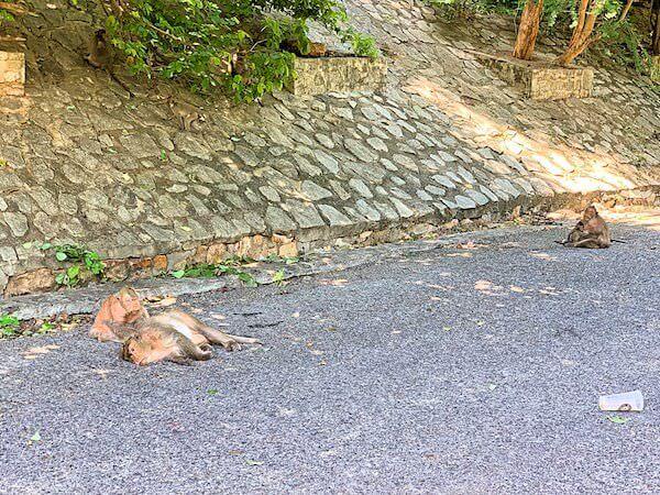 バンセンの猿山で寝ている猿達
