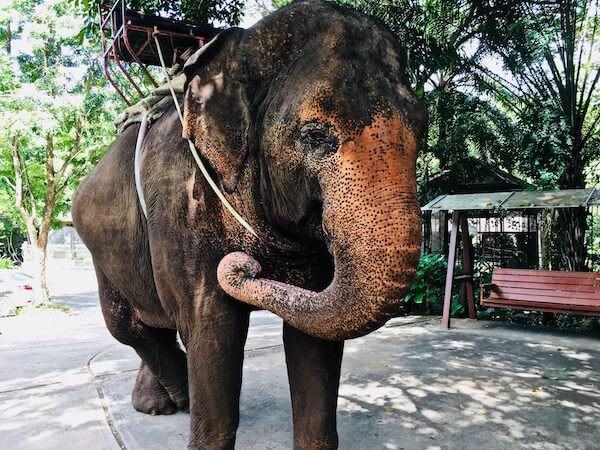 カオヤイにあるエレファントトレッキングの象
