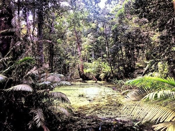 ゴーンゲーン自然トレッキングコース内の池