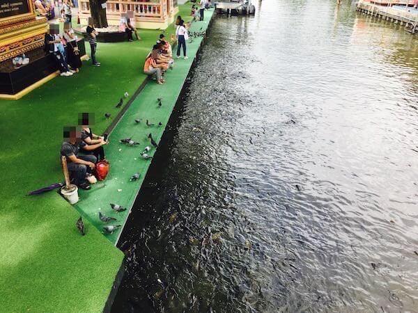 水辺で動物に餌をあげている人々