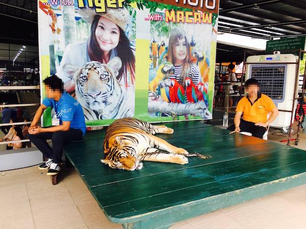虎との記念撮影