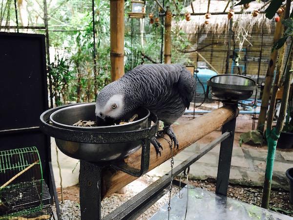 パタヤエレファントビレッジの動物園2
