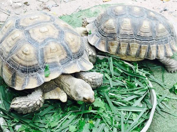 パタヤエレファントビレッジの動物園3