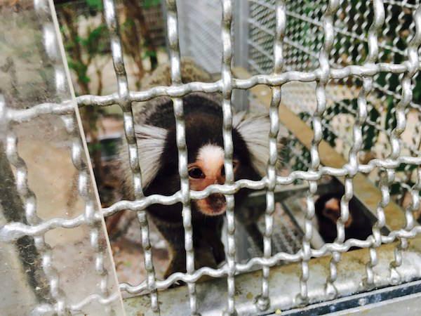 パタヤエレファントヴィレッジの動物園4