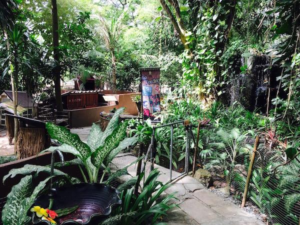 パタヤエレファントヴィレッジの動物園5