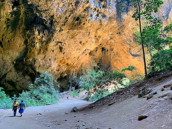 プラヤーナコーン洞窟内に生える植物
