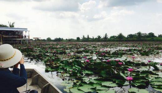 ナコンパトムにある蓮が美しい水上マーケット「red lotus floatoing market」の魅力とバンコクからの行き方。