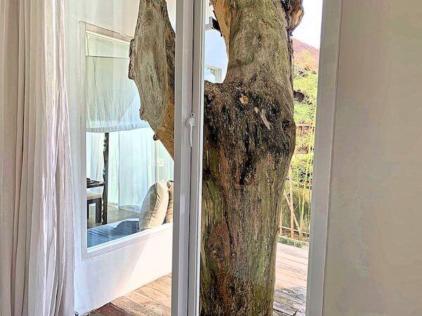 サラ アユタヤ(sala ayutthaya)の客室バルコニーに生えている木