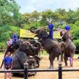 サムプラン象園でのショー1