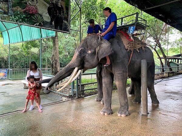 象に餌をあげているタイ人の子供