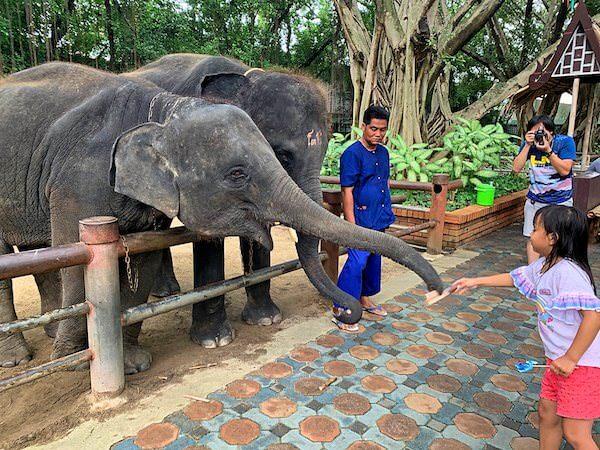 サムプランエレファントグランドアンドズー(サムプラン象園)で飼育されている赤ちゃん象