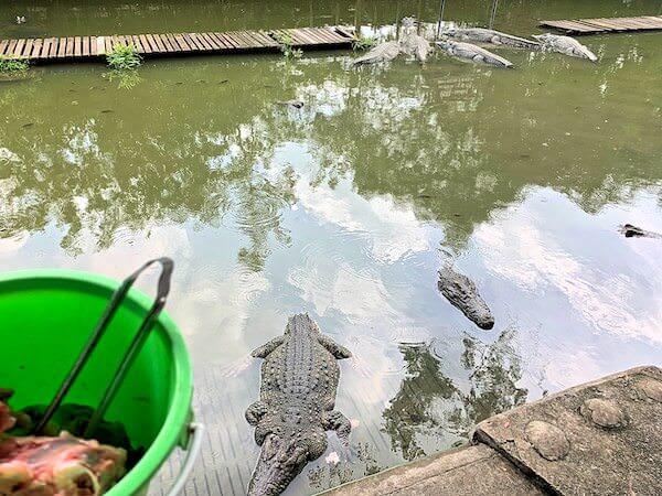 サムプランエレファントグランドアンドズー(サムプラン象園)にあるワニへの餌やりコーナー2