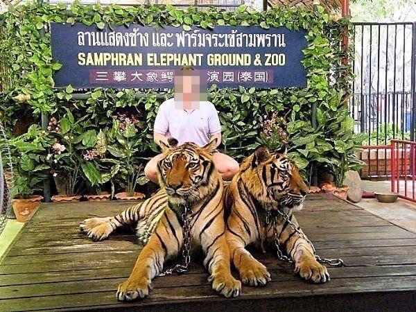 サムプランエレファントグランドアンドズー(サムプラン象園)での虎との記念撮影