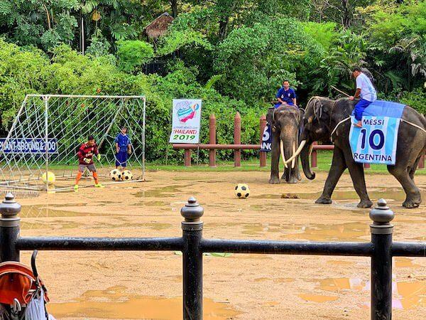 サムプランエレファントグランドアンドズー(サムプラン象園)のサッカーショー1