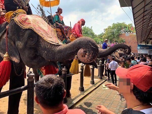 ショーに出てた象達との記念撮影