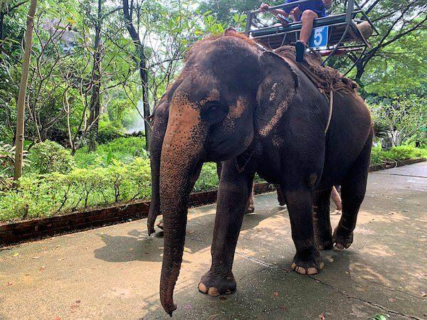 サムプランエレファントグランドアンドズー(サムプラン象園)での象乗りトレッキング