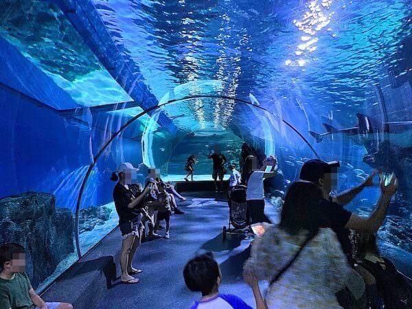 シーライフオーシャンワールドバンコク(Sea Life Ocean World Bangkok)の水中トンネル