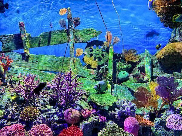 シーライフオーシャンワールドバンコク(Sea Life Ocean World Bangkok)で展示されているサンゴ礁と魚