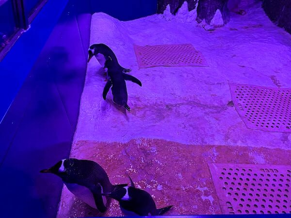 シーライフオーシャンワールドバンコク(Sea Life Ocean World Bangkok)で展示されているペンギン2