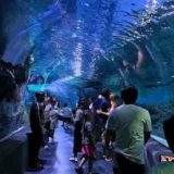 シーライフオーシャンワールドバンコク(Sea Life Ocean World Bangkok)の水中トンネル2