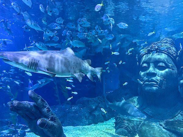 シーライフオーシャンワールドバンコク(Sea Life Ocean World Bangkok)の水中トンネル3