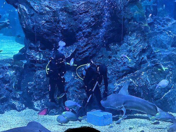 シーライフオーシャンワールドバンコク(Sea Life Ocean World Bangkok)の餌付けショー