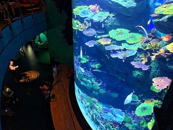 シーライフオーシャンワールドバンコク(Sea Life Ocean World Bangkok)の巨大水槽
