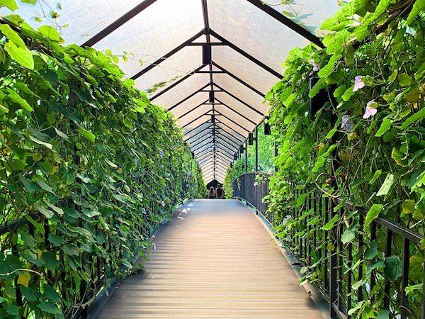 サイアムベイショアリゾートパタヤ(Siam Bayshore Resort Pattaya)の敷地内に架かる橋
