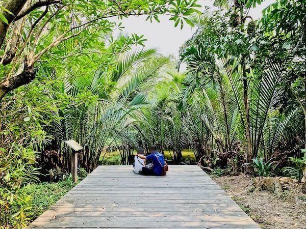 シーナコンクエンカン公園のマングローブ植物ガーデン