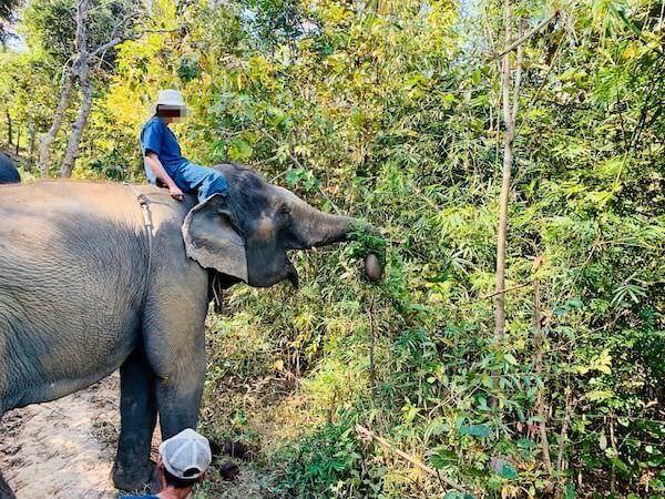 トレッキング中に草を食べている象