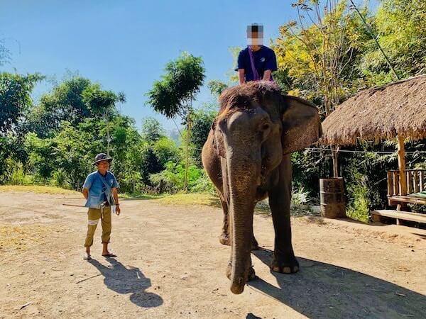初めての象使い体験