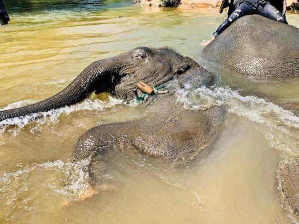 水浴びをしている子供の象