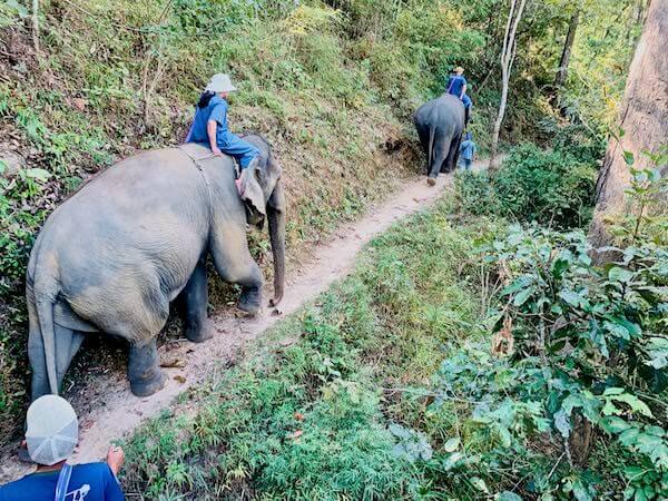 象使い体験のトレッキング1