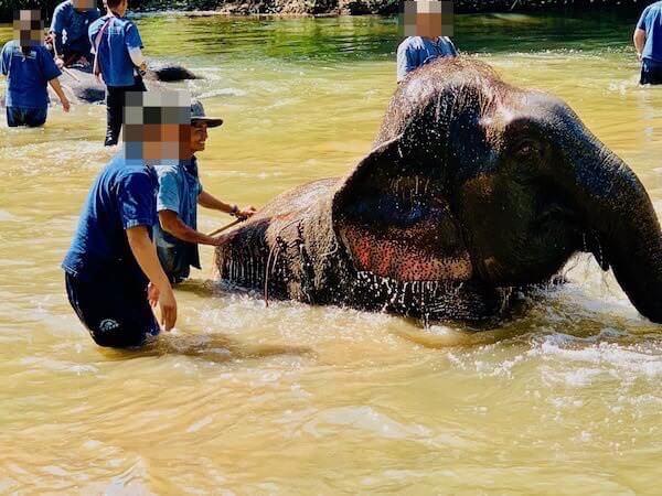 象使い体験での象との水浴び1