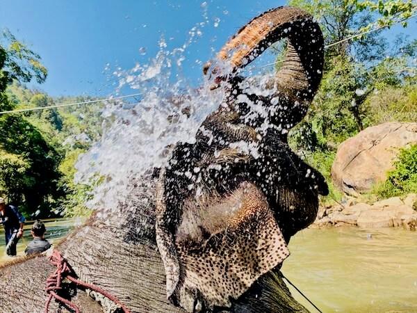 自分で水浴びする象さん