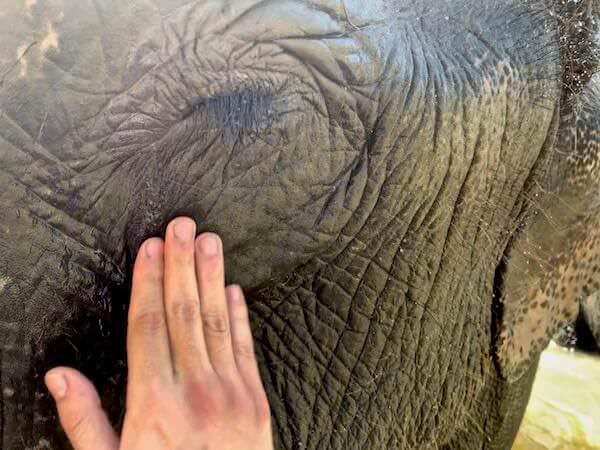 象の目やにを洗っている様子