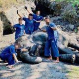 タイ エレファントホームでの象の泥浴び