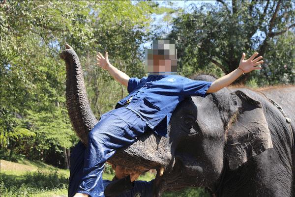 タイ エレファントホームにEメールで送ってもらった写真