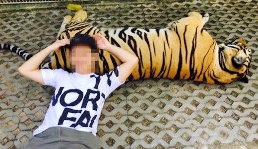 タイガーパークパタヤ。虎を猫のようにモフモフして写真を撮れる観光スポット。