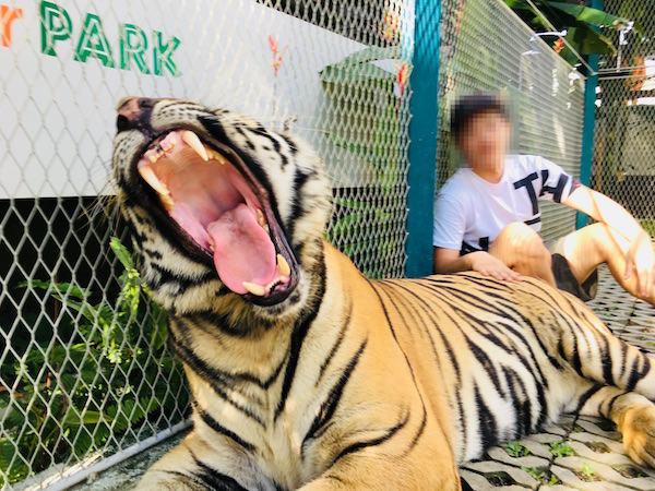 タイガーパークパタヤでの撮影3
