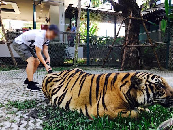 タイガーパークパタヤでの撮影5