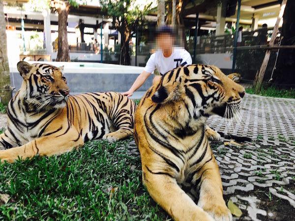 タイガーパークパタヤでの撮影6