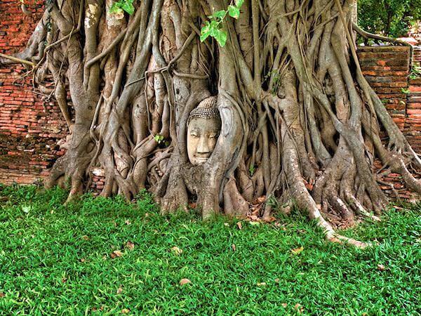 ワットマハタートにある首だけの仏陀